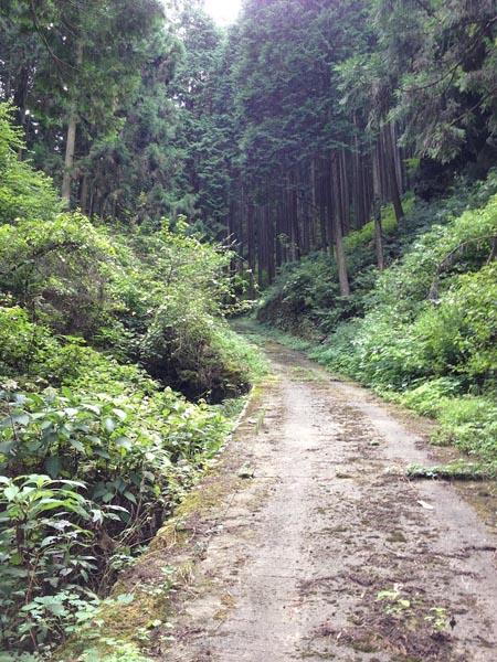 hinokiiwa020.jpg