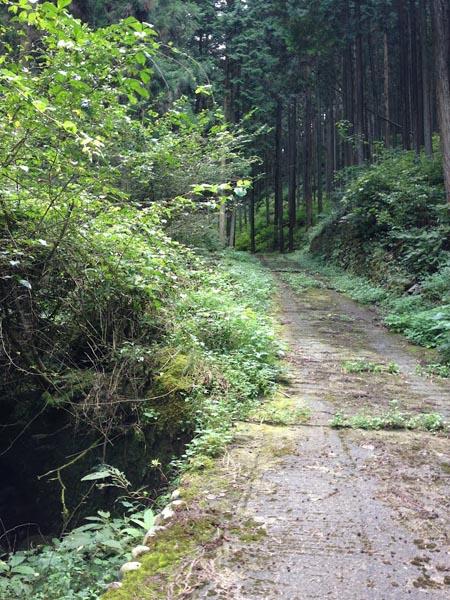 hinokiiwa021.jpg