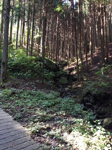 honodeyama019.jpg