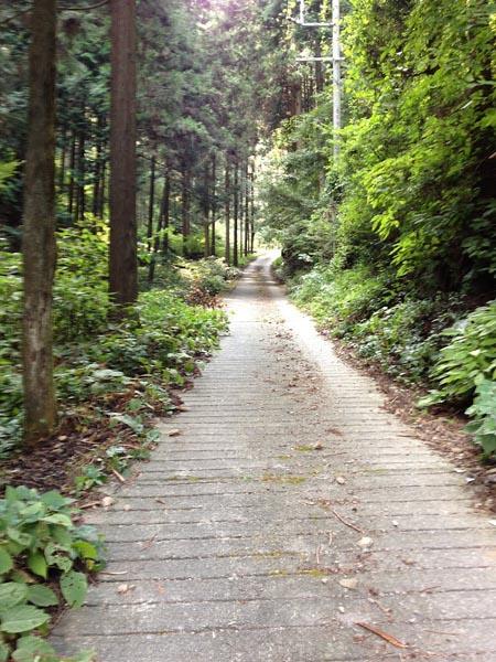 honodeyama020.jpg