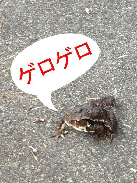huehuki014.jpg