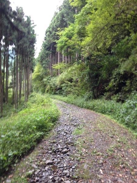 irikawa013.jpg