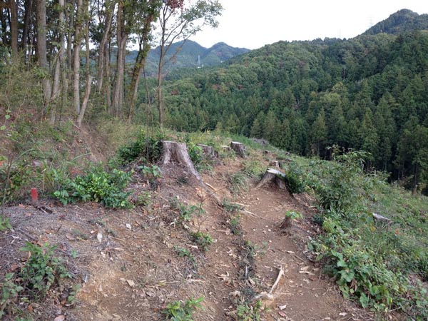 kongo006.jpg