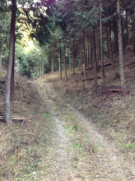 mitsuzawa004.jpg