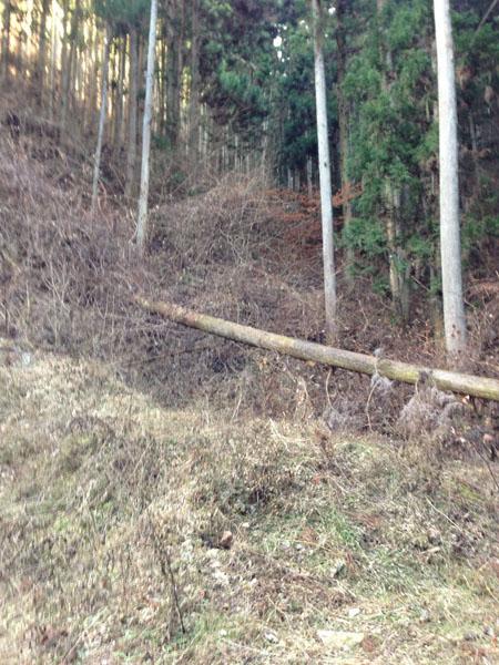 mitsuzawa026.jpg