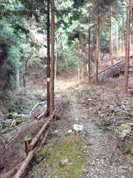 mitsuzawa031.jpg