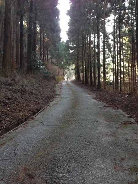miyazawa005.jpg
