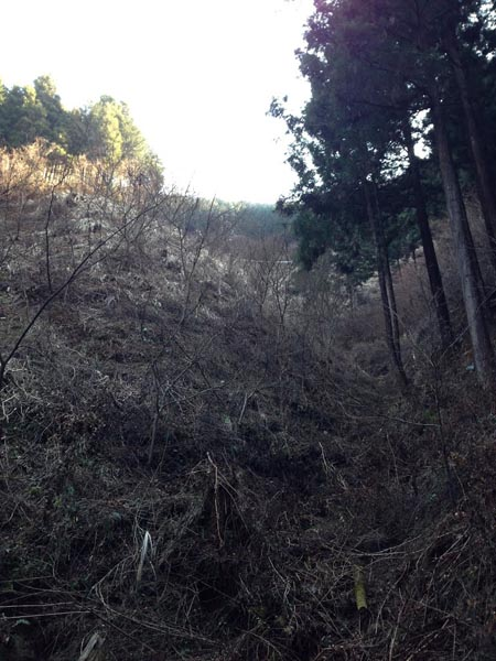 miyazawa009.jpg