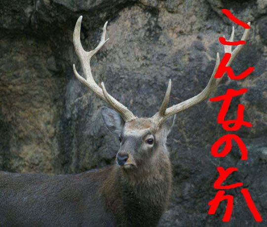 myouou046.jpg