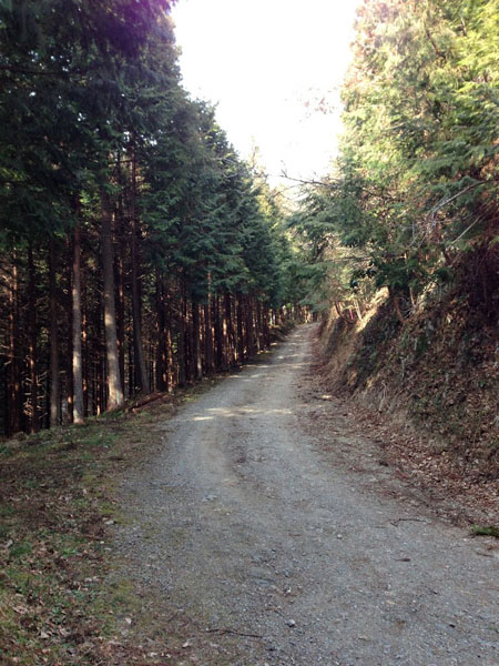 ninikusawa004.jpg
