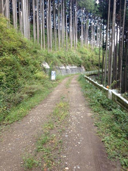 nishikawa032.jpg