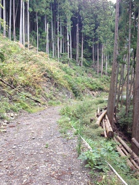 nishikawa038.jpg