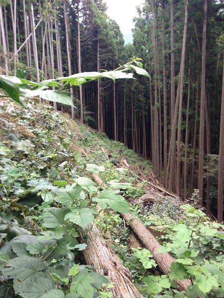nishikawa041.jpg