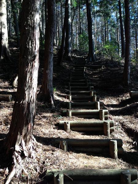tougatake002.jpg