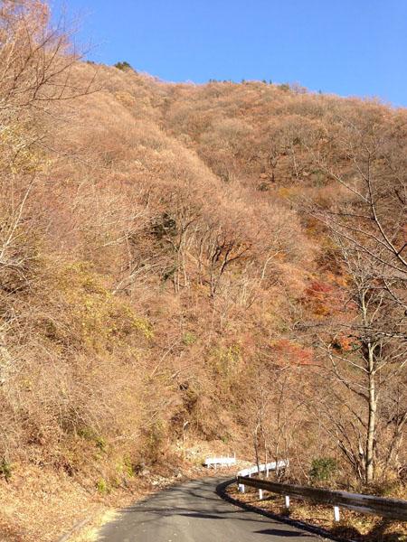 tougatake032.jpg