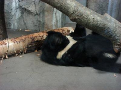 円山動物園アジアゾーン002