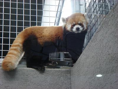 円山動物園アジアゾーン003