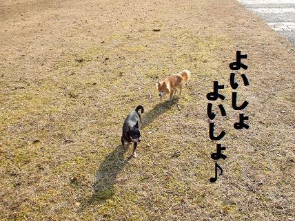 海&豆森公苑散歩1-16
