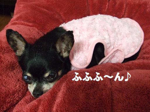 豆ピンク服1-17