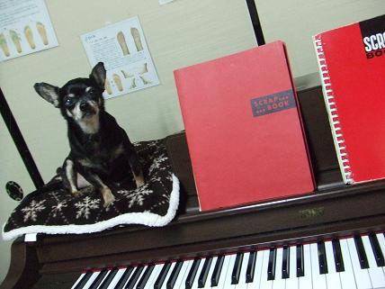 豆on piano