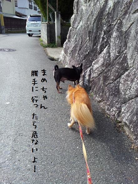 海&豆散歩下町2月