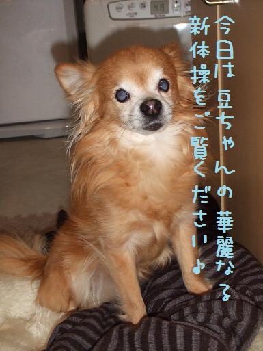 海くん豆の新体操紹介3月