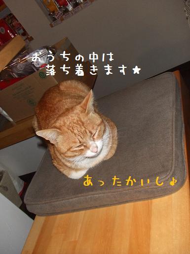 みぃ太TR座布団