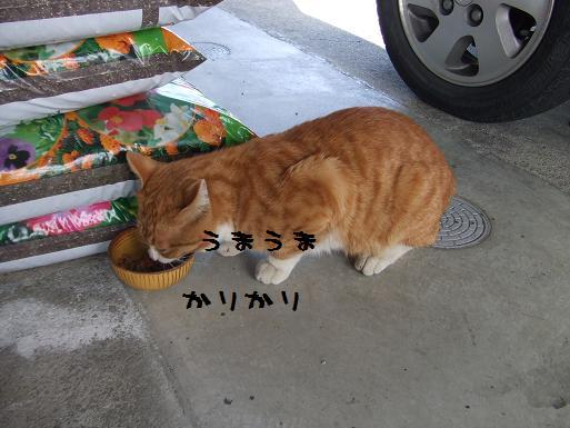 みぃ太カリカリ