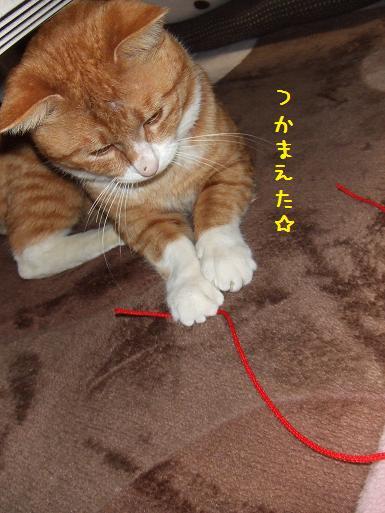 みぃ太紐2