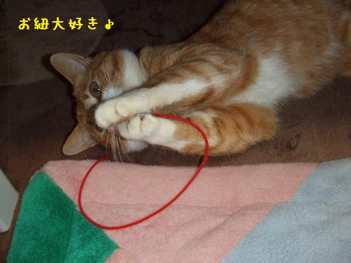 みぃ太紐3
