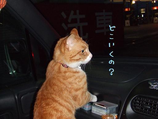 みぃ太トライヤル車中