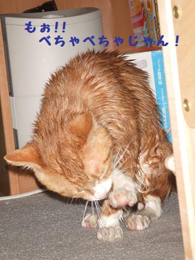 みぃ太シャンプー後2