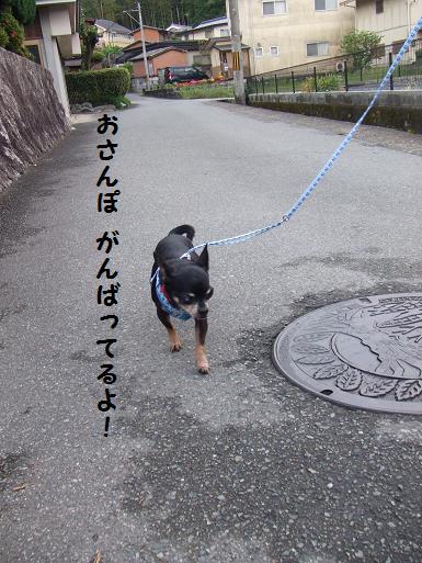 豆散歩withハーネス