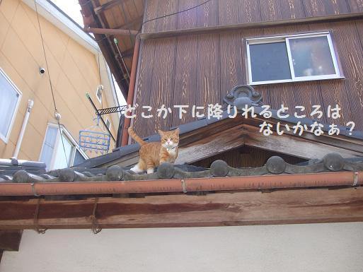 みぃ太屋根散歩