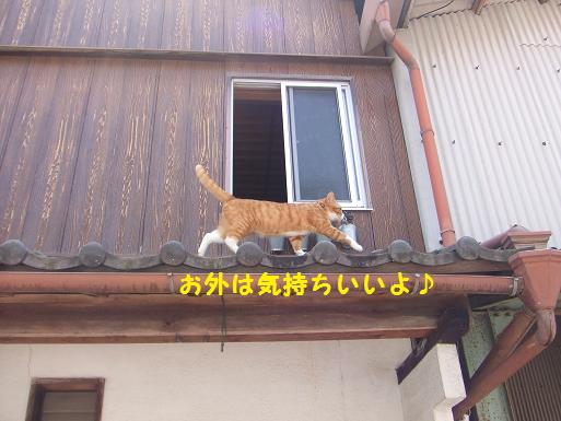 みぃ太屋根散歩2