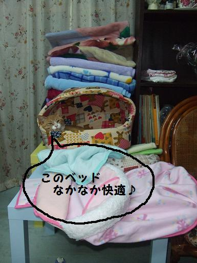 みぃ太洗濯済のベッドで