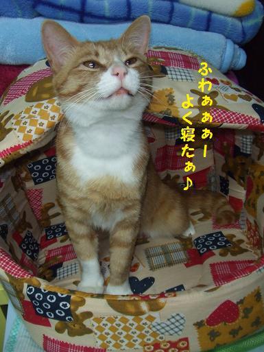みぃ太洗濯済のベッドで2