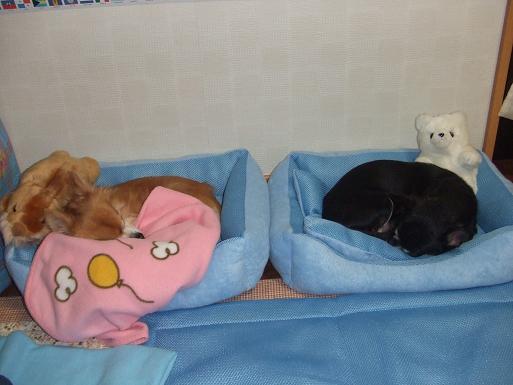 夏用ベッドで