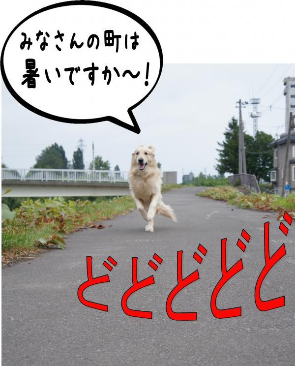 1_convert_20120813141632.jpg