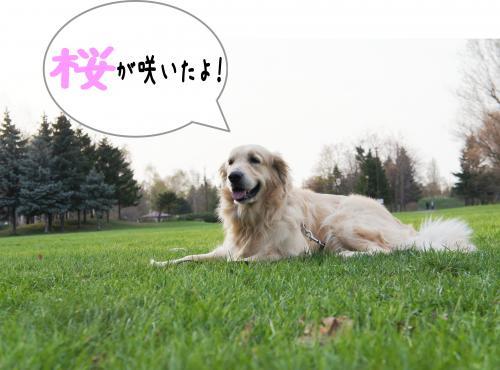 2_convert_20120430181645.jpg