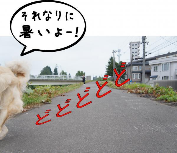 2_convert_20120813141938.jpg