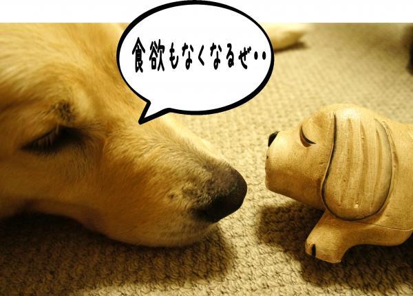 2_convert_20121001185342.jpg