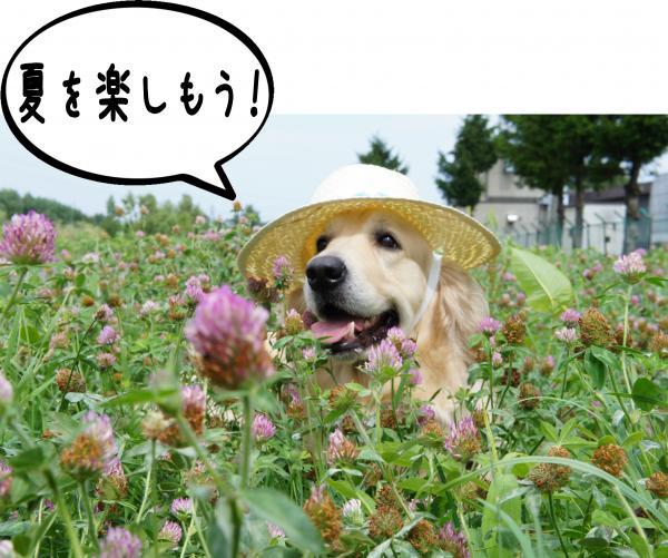 5_convert_20120813142715.jpg