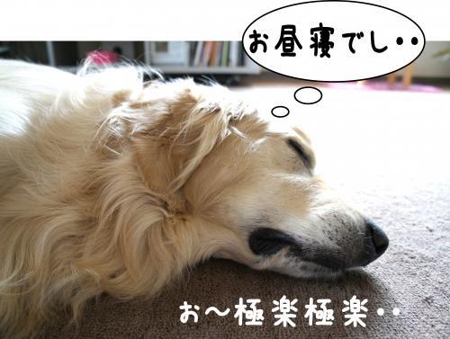 6_convert_20120723121655.jpg