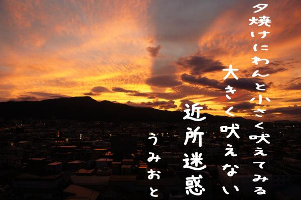 6_convert_20121001185730.jpg