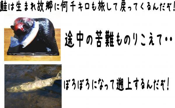 8_convert_20121008100229.jpg
