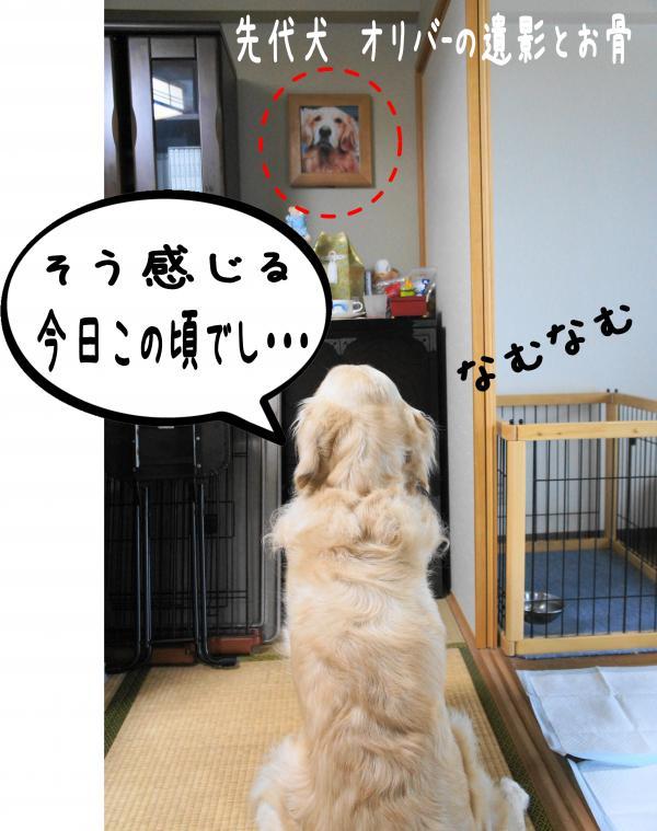 DSC01525_convert_20120903154302.jpg