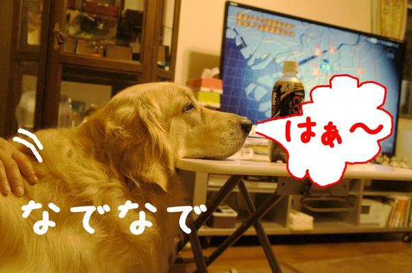 DSC01615_convert_20120903154119.jpg