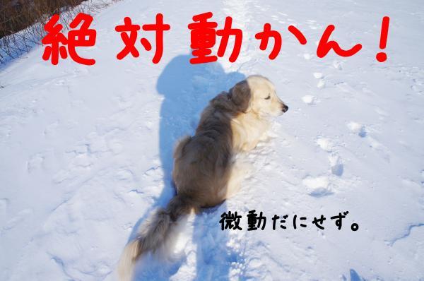 hasiru11_convert_20130105091544.jpg