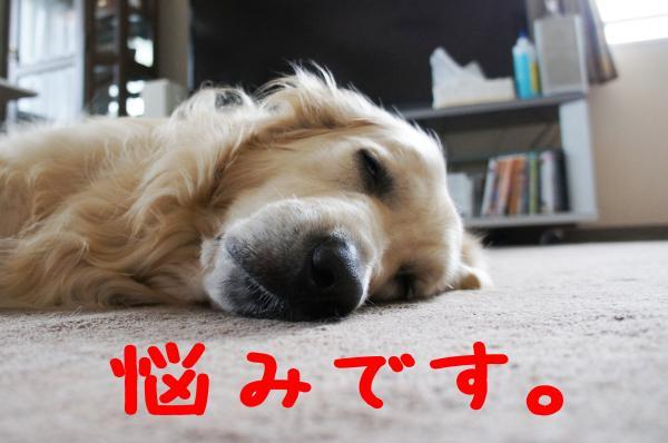 hasiru12_convert_20130105101640.jpg